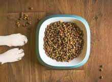 dog-food-supplement